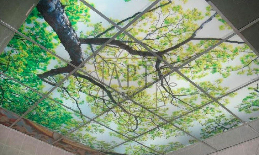 Потолок из стекла, береза
