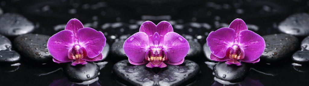 орхидеи и камни