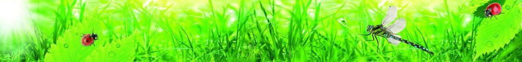 божьи коровки и стрекоза на траве