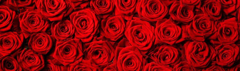 Красные розы фон