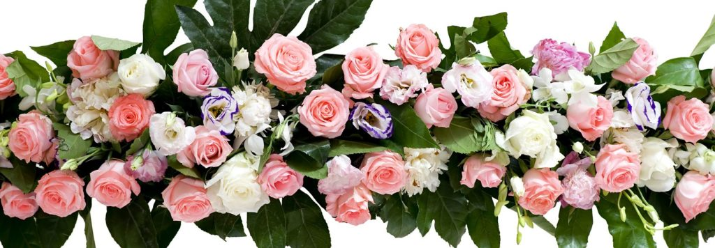 Красивые розы на белом фоне