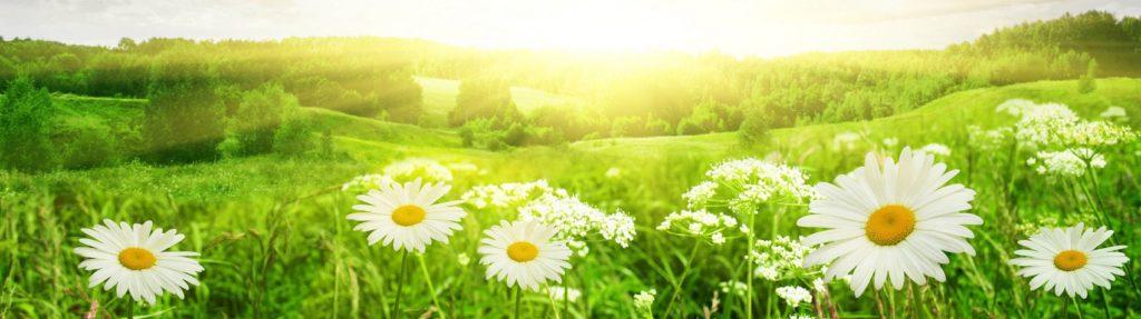 Трава цветы