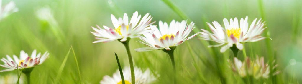 Скинали полевые цветы