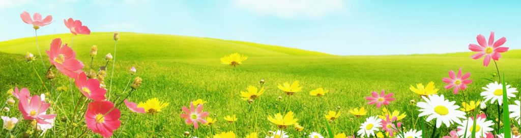 Лето поле цветы