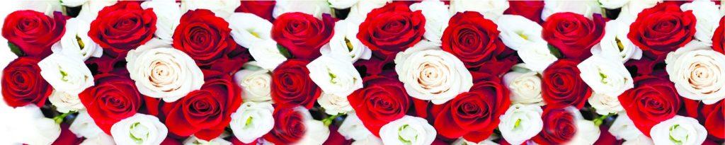 Фон красные и белые розы
