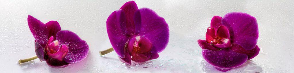 Розовые орхидеи с каплями воды