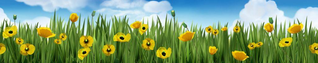 Жёлтые цветы в траве