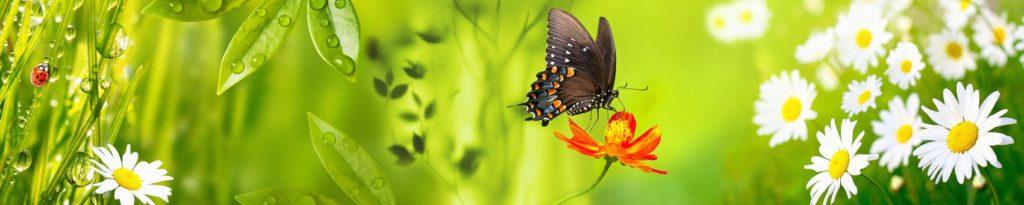 Бабочка и цветок на фоне зелени