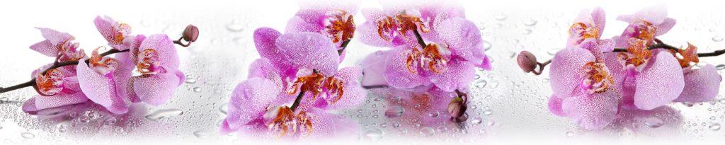 Цветы орхидеи и капли воды