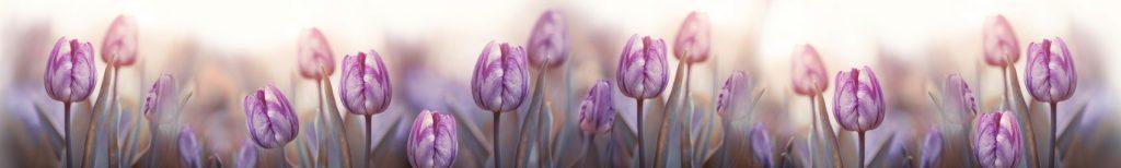 Нежные тюльпаны скинали