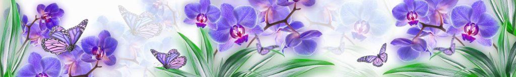 Цветы орхидеи скинали