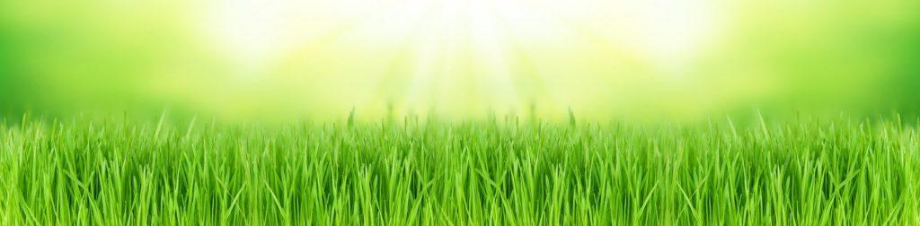 Трава зелень для скинали
