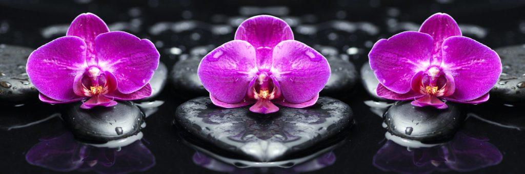 Фаленопсис фиолетовый на камнях
