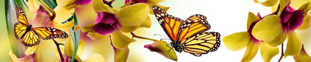 Скинали бабочка с цветами