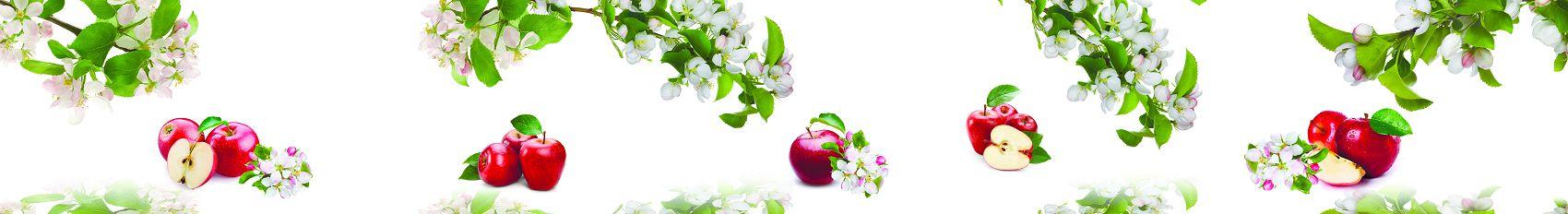 Цветы яблони с яблоками на белом фоне