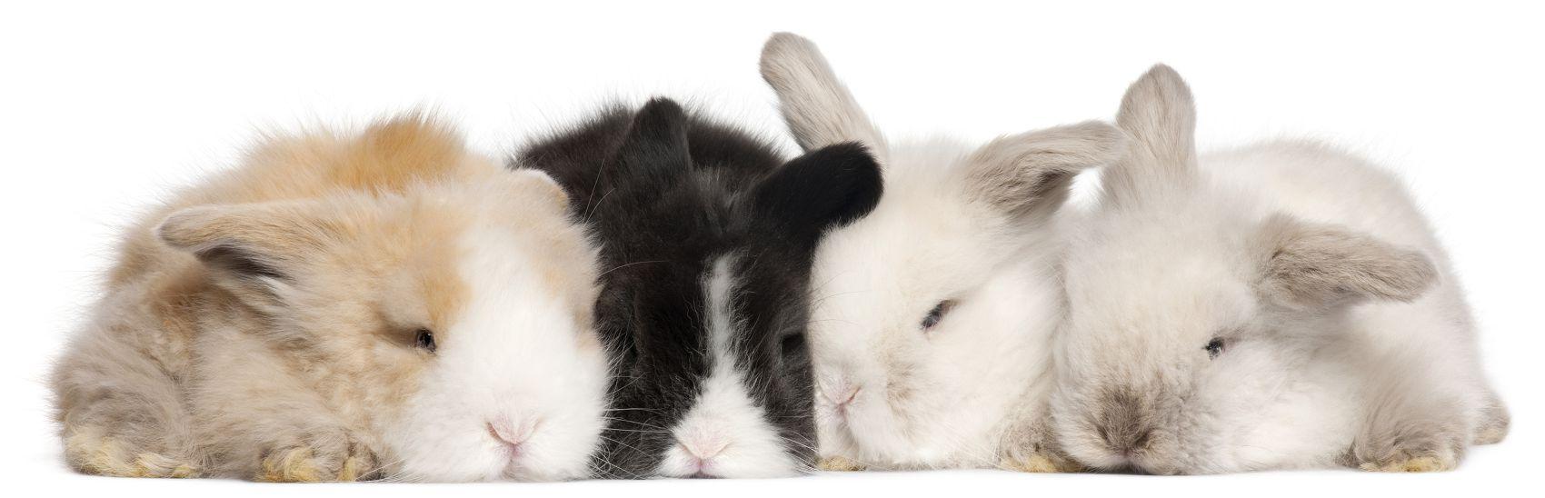 Кролики на белом фоне