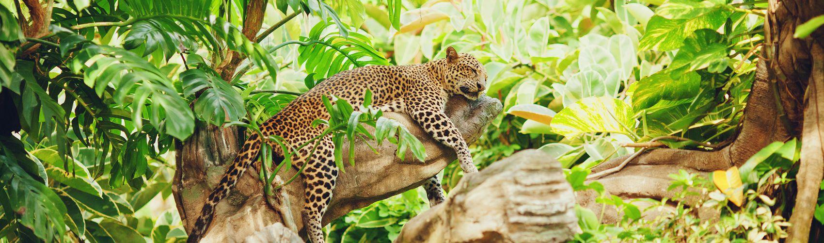 Фартук для кухни леопард в джунглях