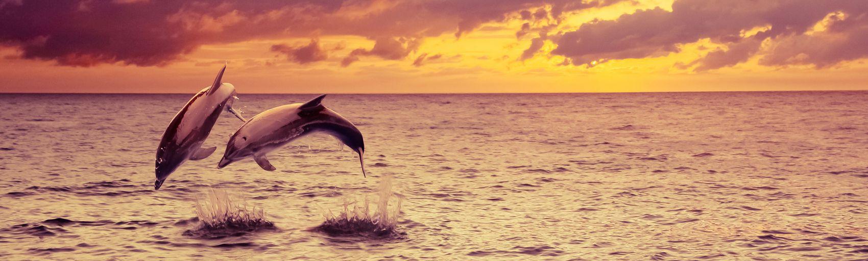 Дельфины в море на закате