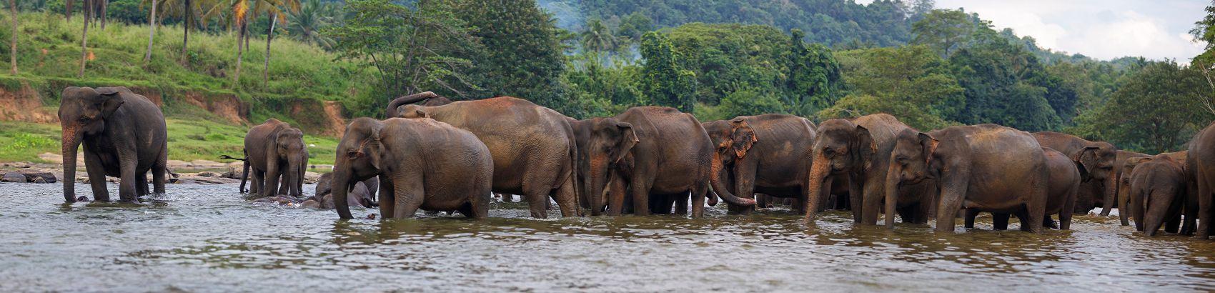 Слоны на водопое вечером