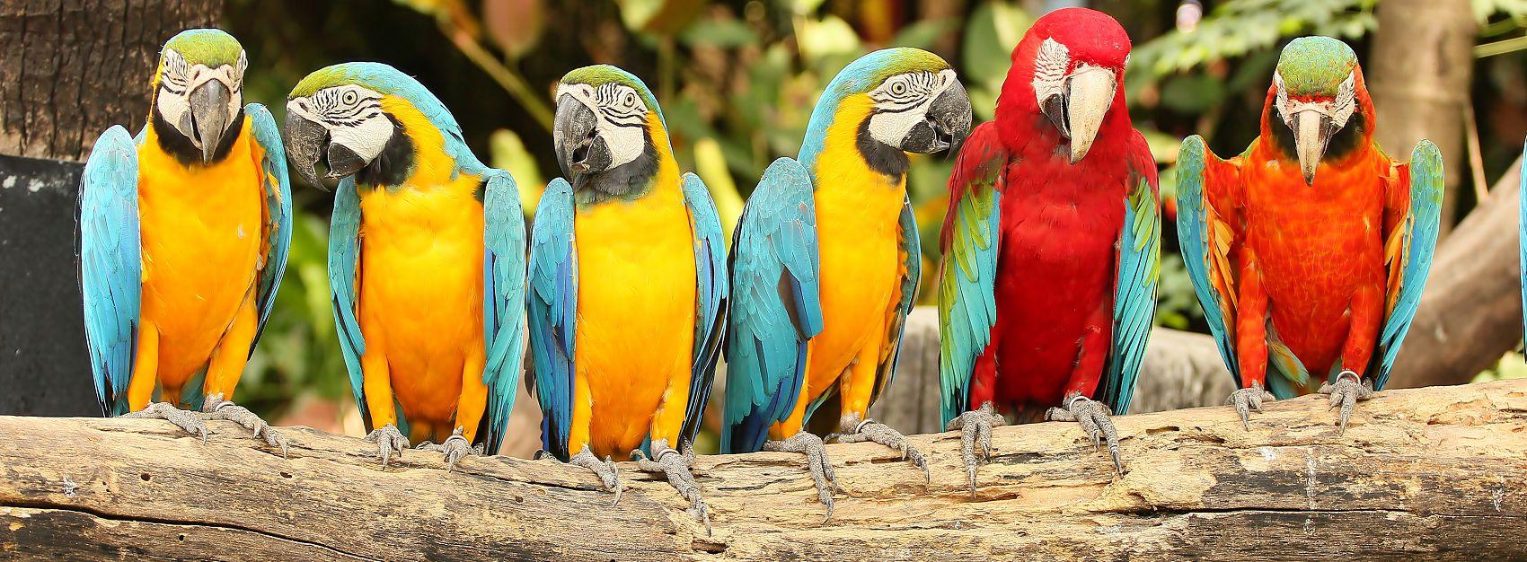 Попугаи скинали