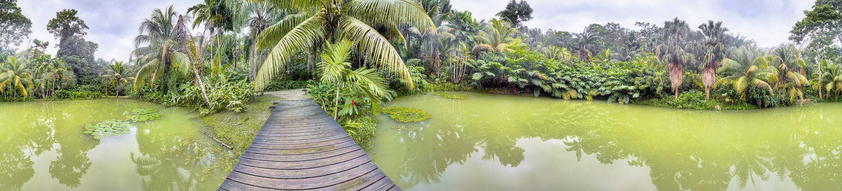 Тропики джунгли панорама