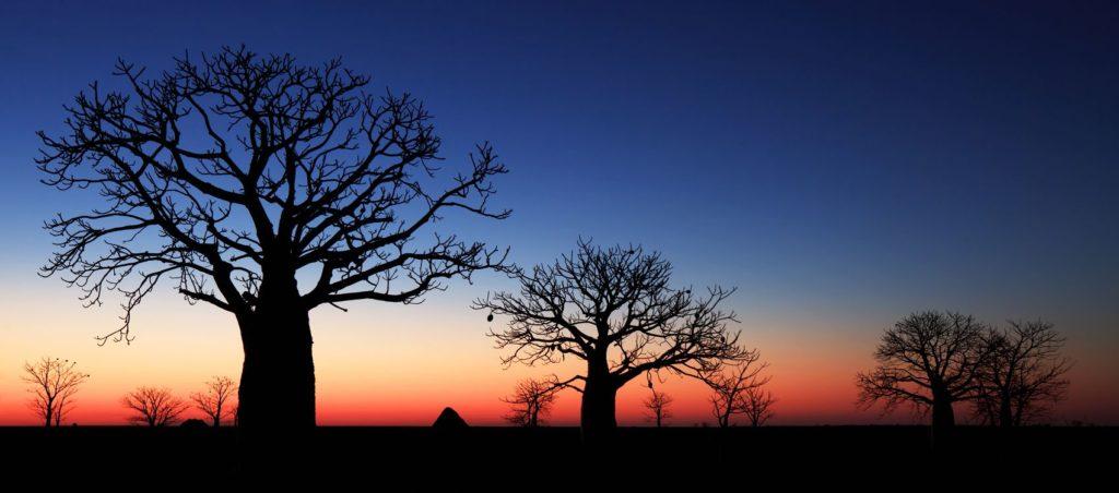 Дерево закат
