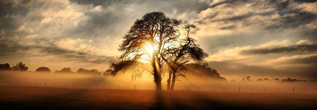 Дерево на фоне заката